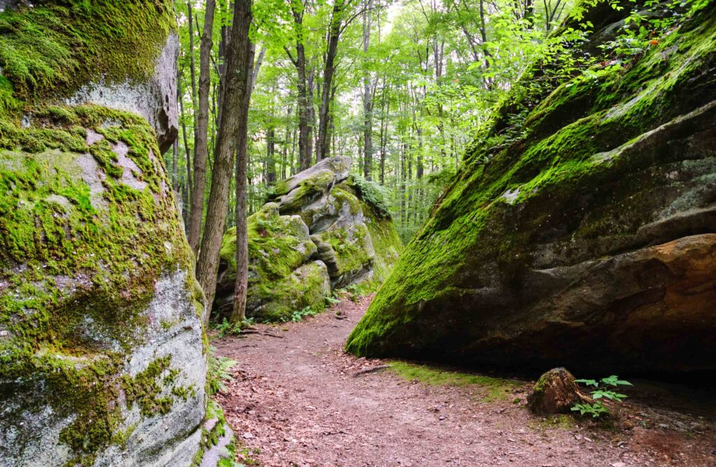 Hiking Trail at Allegany State Park